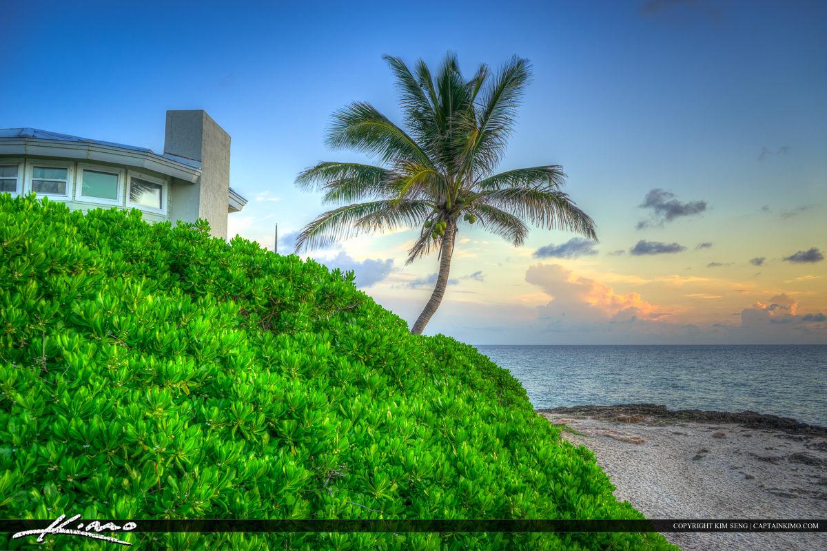 Coconut tree at beach Stuart Florida along Bathtub Beach