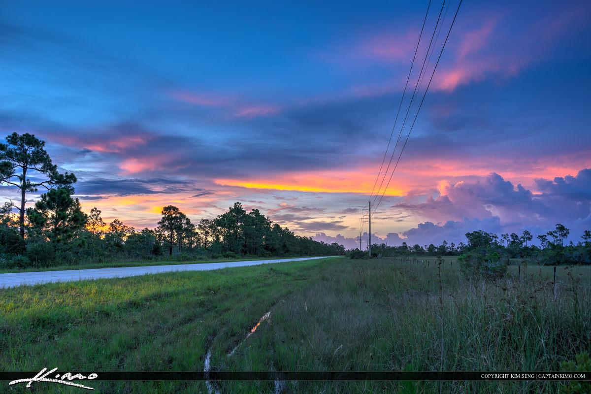 Along the Road Florida Wetlands Landscape