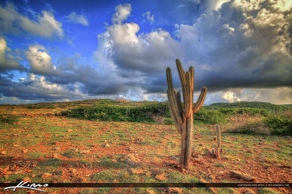 Curacao Landscape Cactus Plant