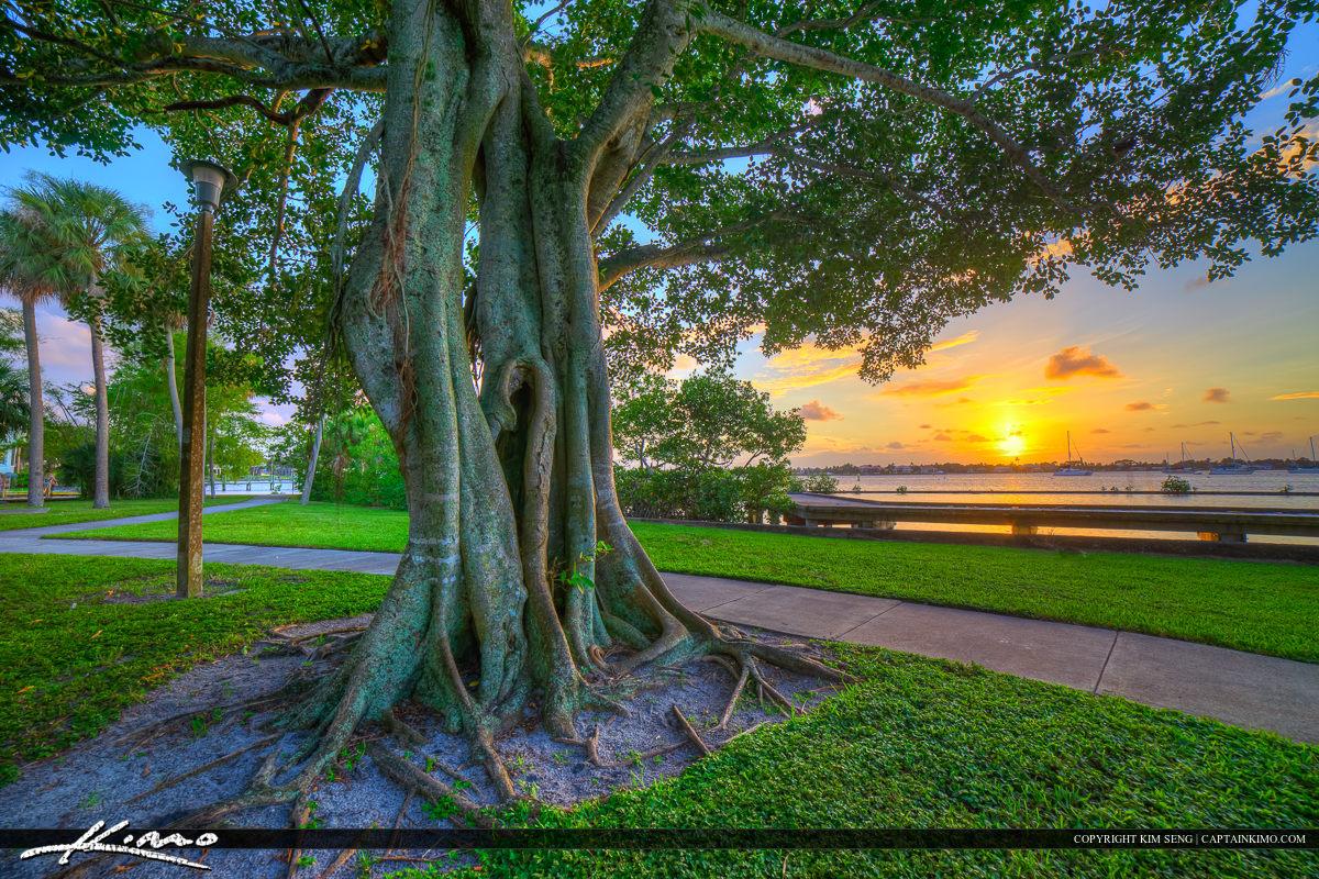 Stuart Florida Sunset Shepard Park Banyan Tree