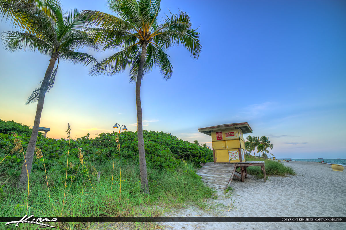 Hollywood Florida at the Beach Coconut Trees