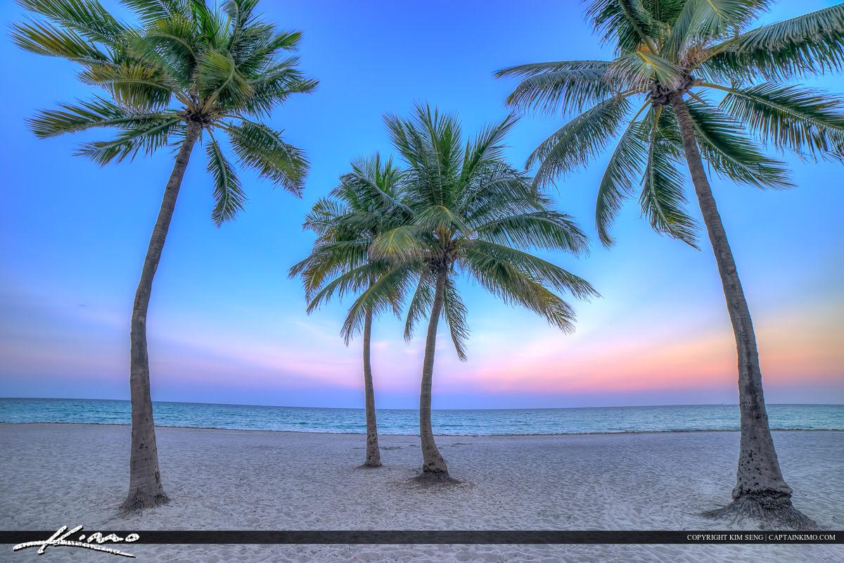 Hollywood Florida Coconut Trees at Beach