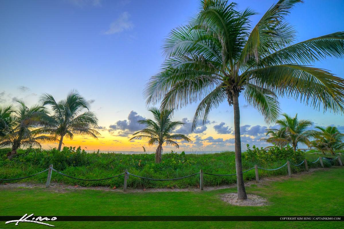 Pompano Beach Coconut Tree on Grass