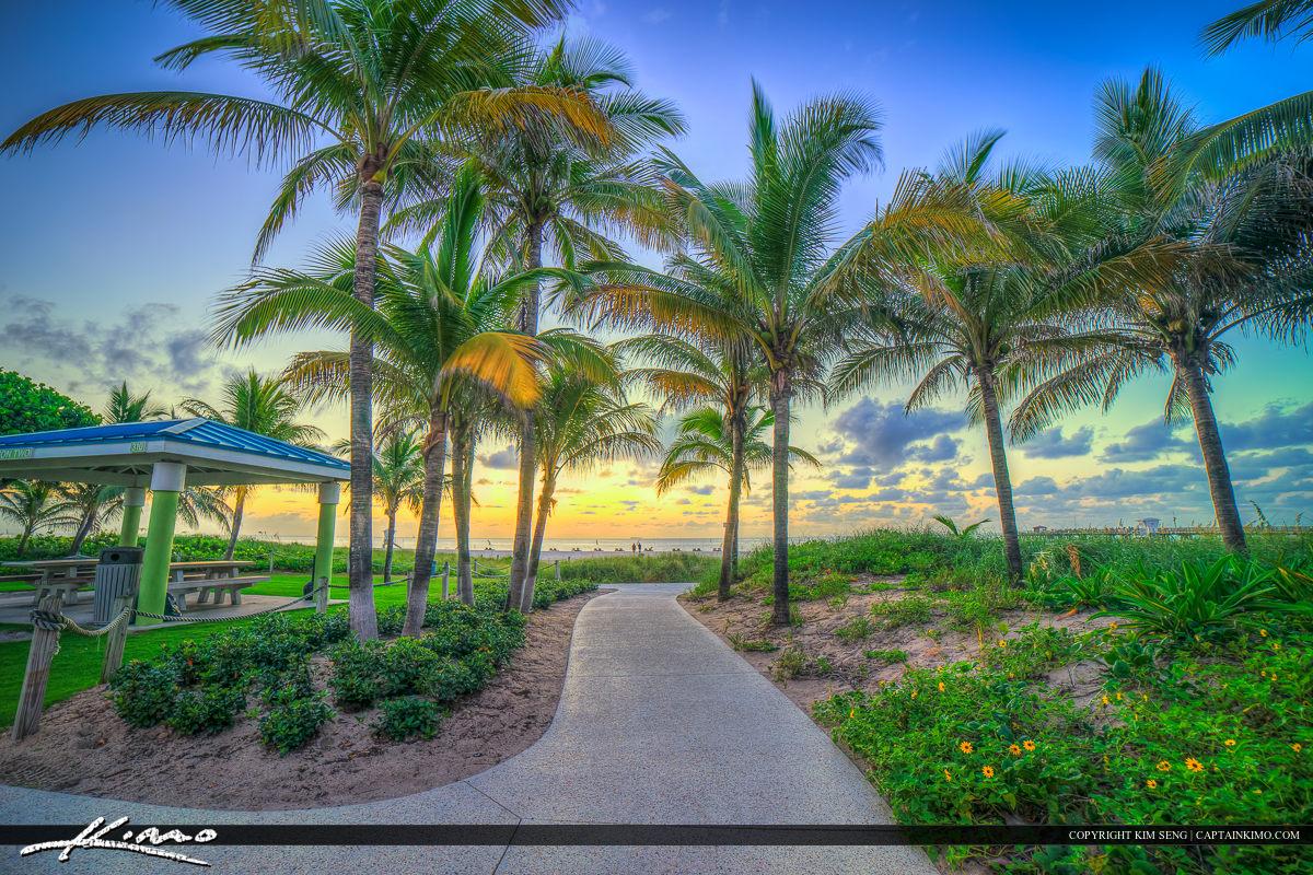 Pompano Beach Coconut Tree at Beach