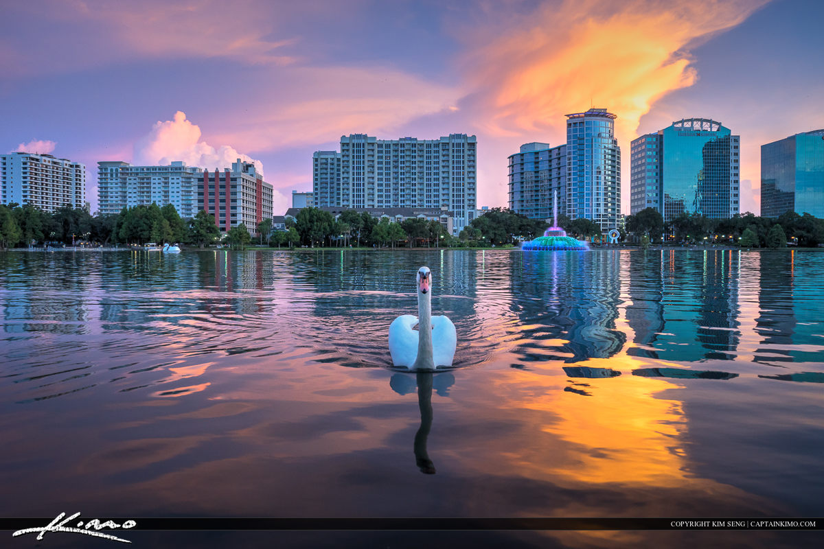 Lake Eola Park Swan in Downtown Orlando Florida