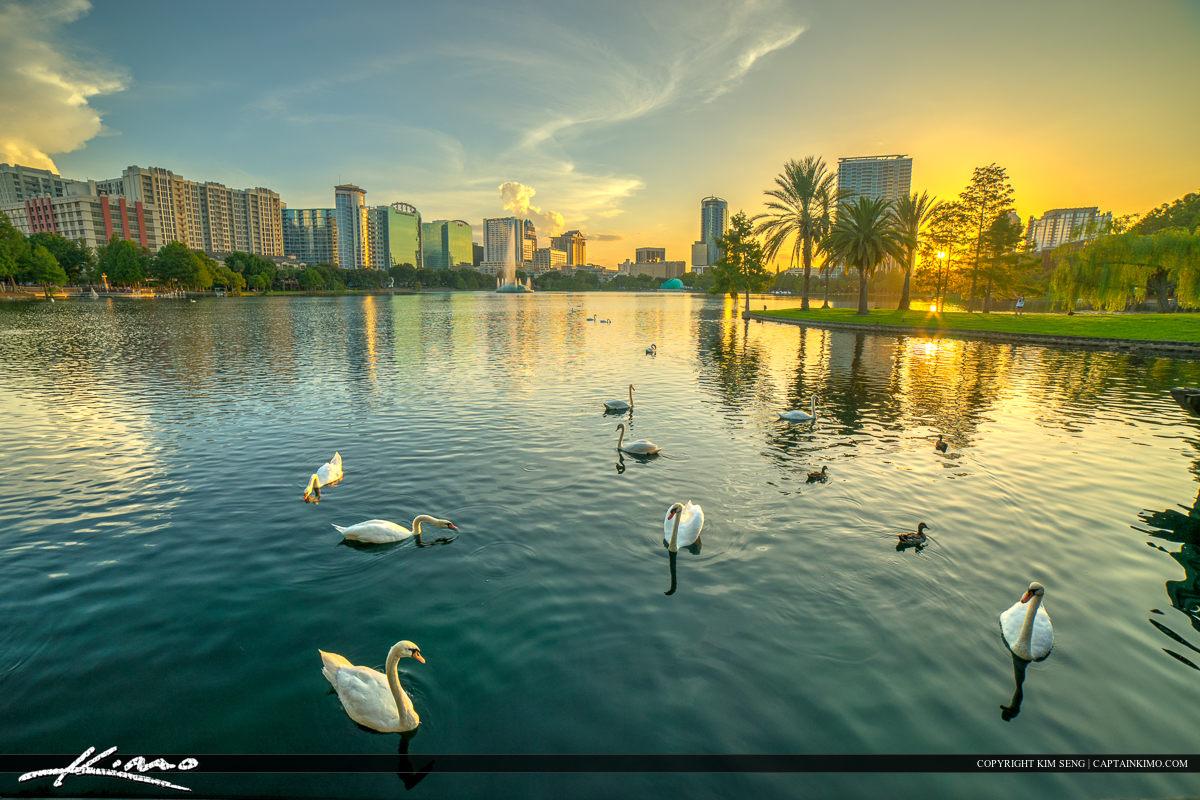 Orlando City Downtown Lake Eola Park Swans at Lake
