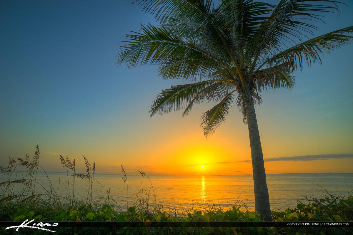 Florida Beach Sunrise Coconut Tree Treasure Coast