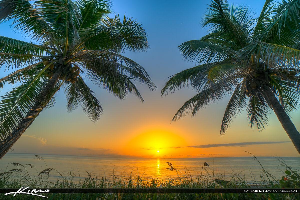Florida Beach Sunrise Coconut Tree Palm Beach County