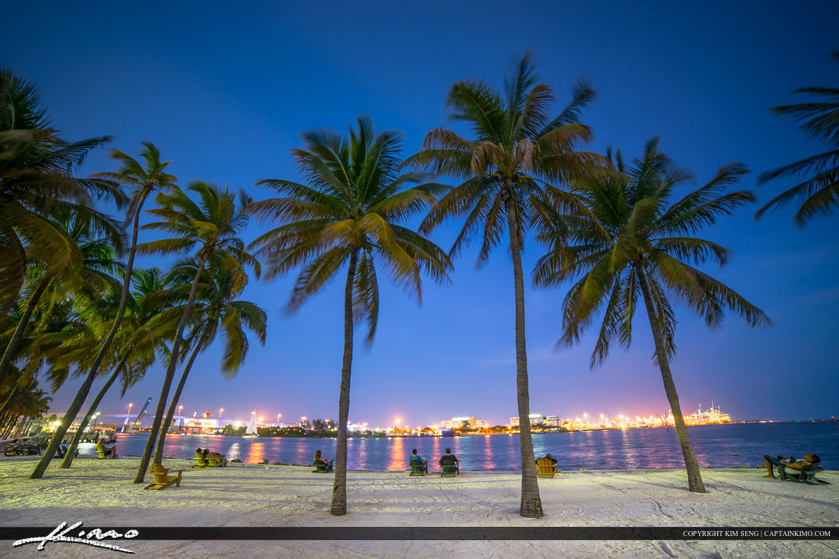 Miami City Downtown Bayshore Park Coconut Trees