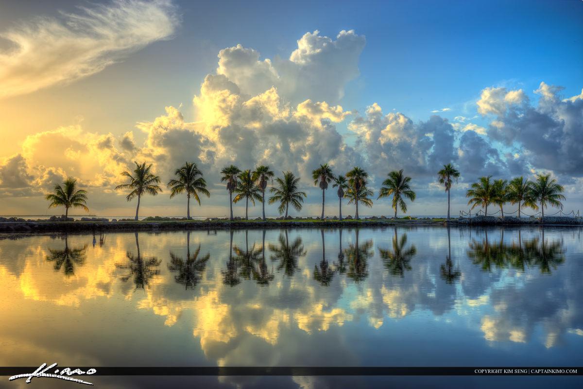 Matheson Hammock Park Coconut Tree Row Sunrise Reflection