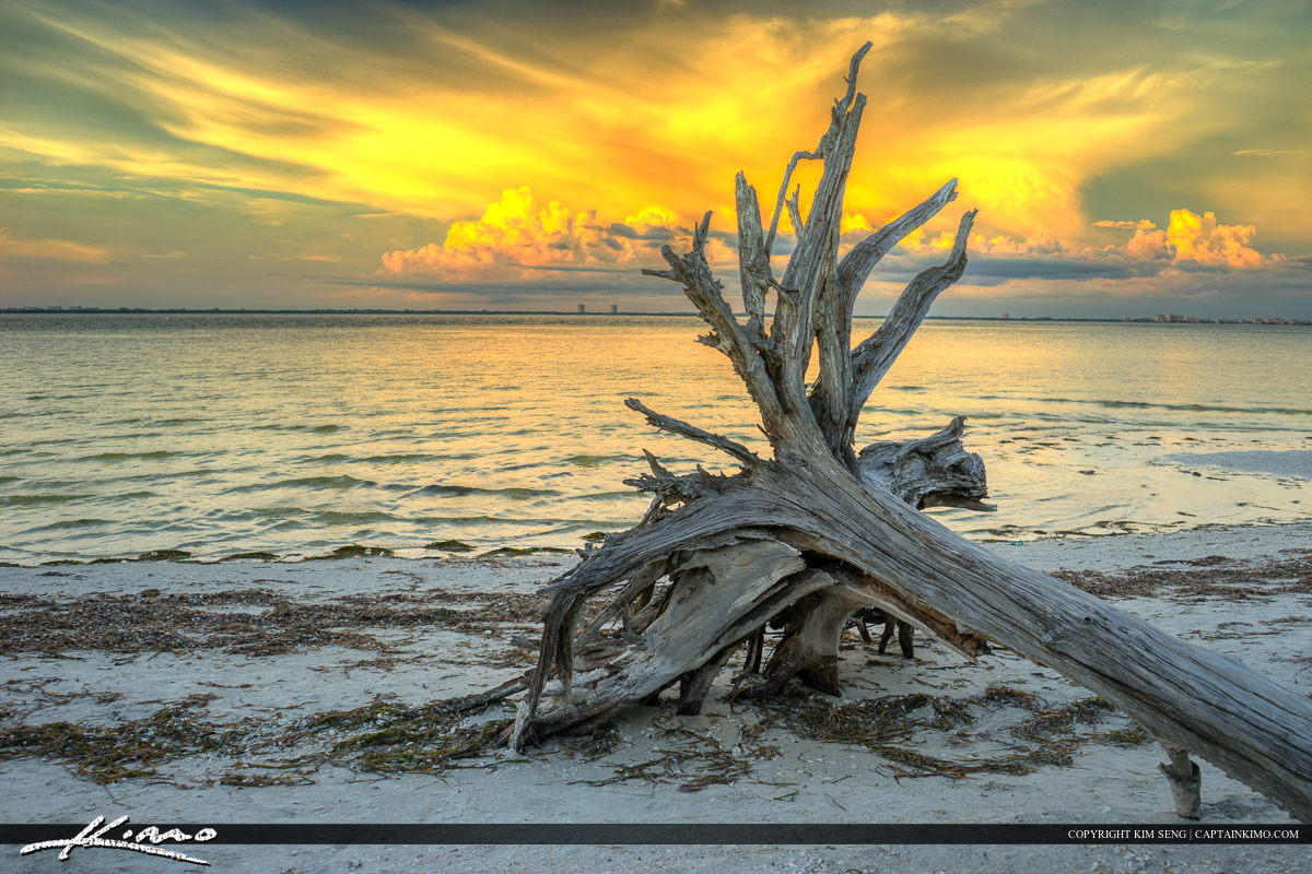 Sanibel Island Driftwood at Beach