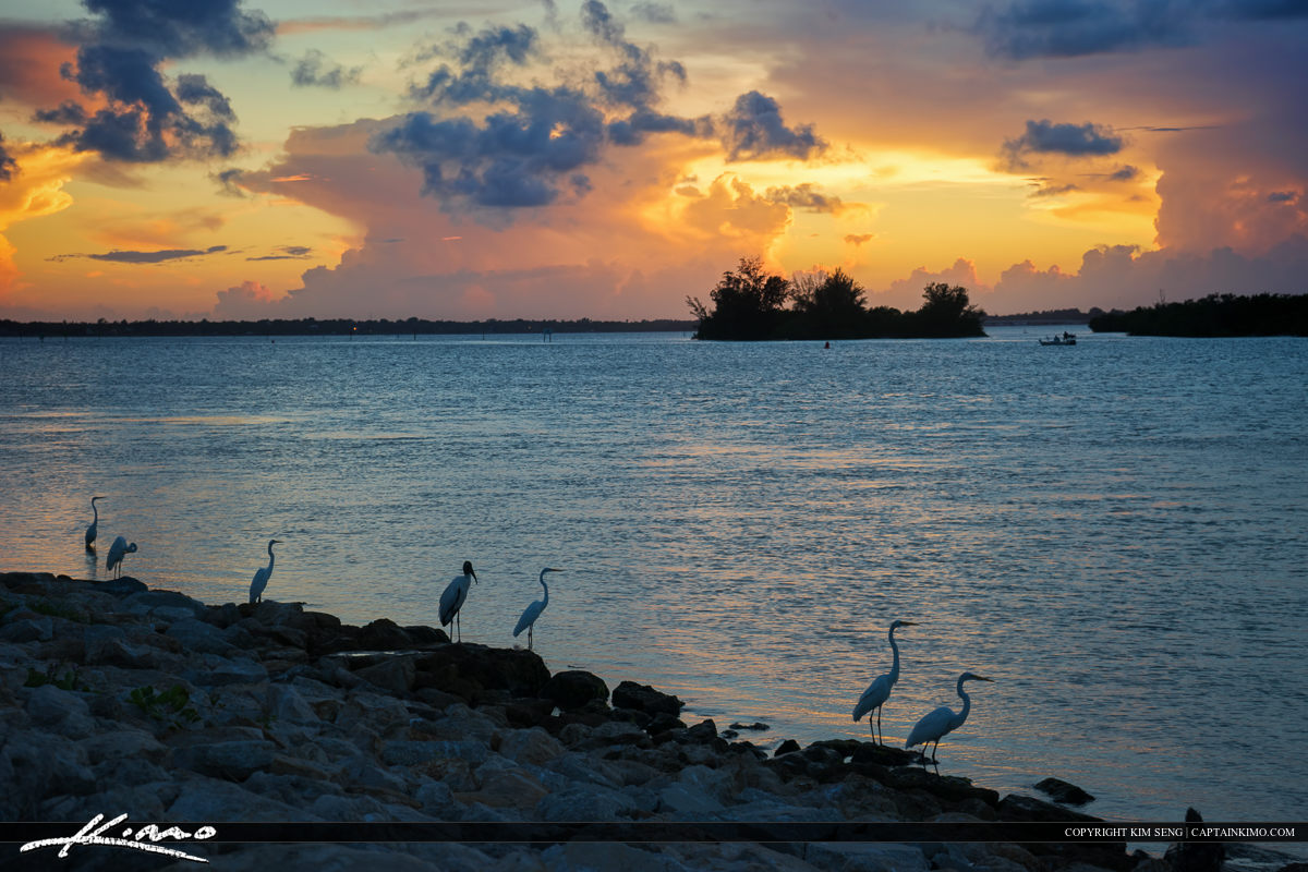 Sebastian Inlet Sunset Birds at Shore