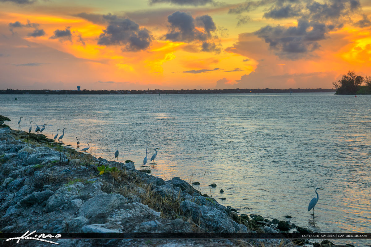 Sebastian Inlet State Park Birds at Sunset