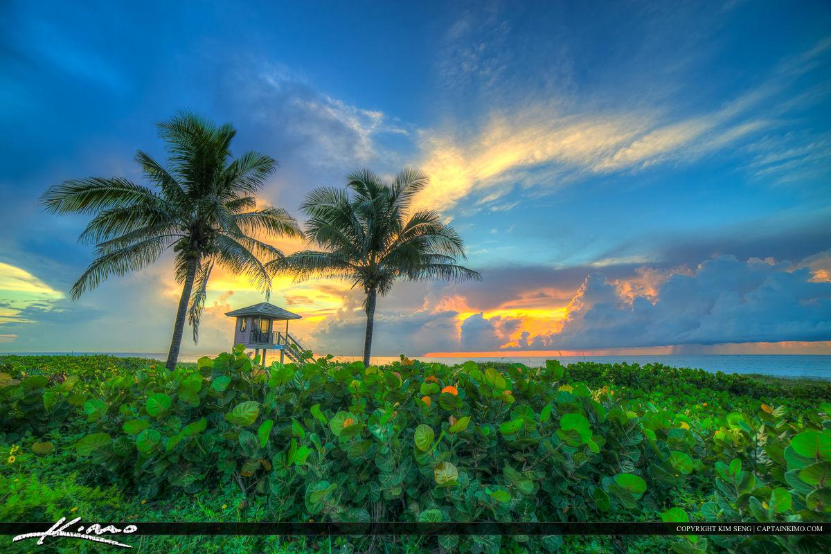 Delray Beach Florida Coconut Tree at Beach