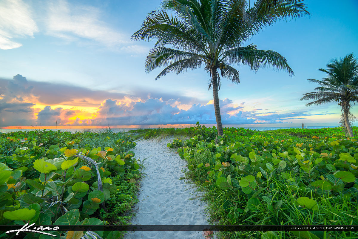 Delray Beach Florida Coconut Tree at Sunrise