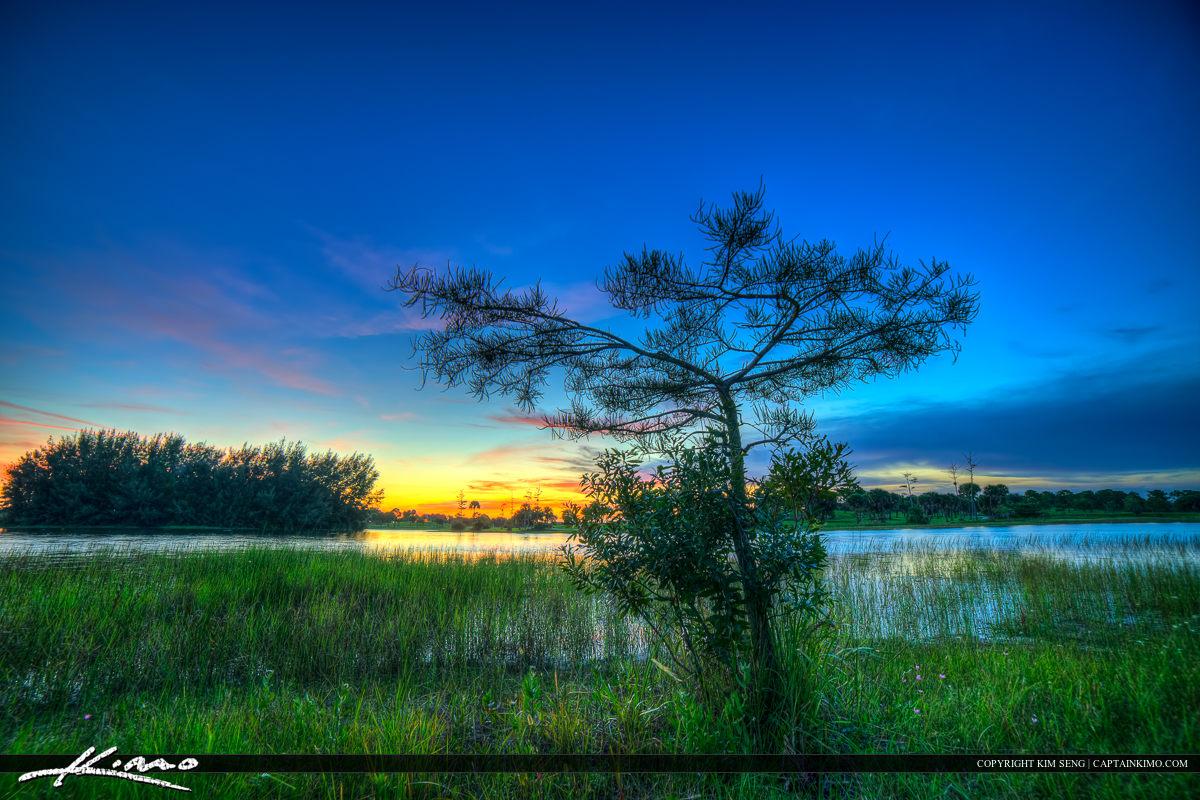Okeeheelee Park Small Cypress Tree at Lake