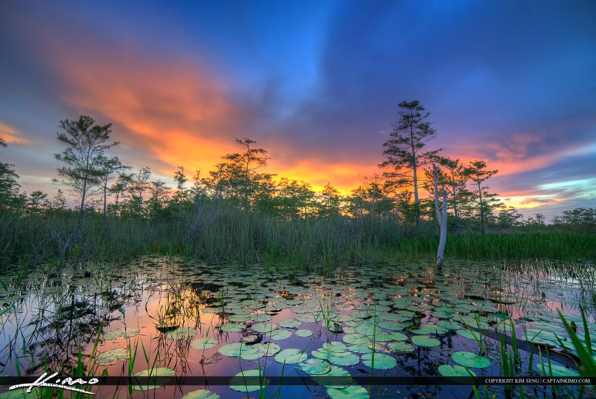 Loxahatchee Slough Lilypads Florida Wetlands