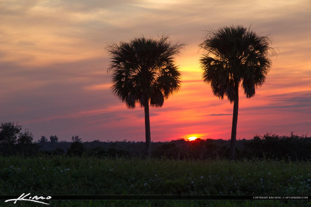 Palm Tree Sunset at Dyer Park
