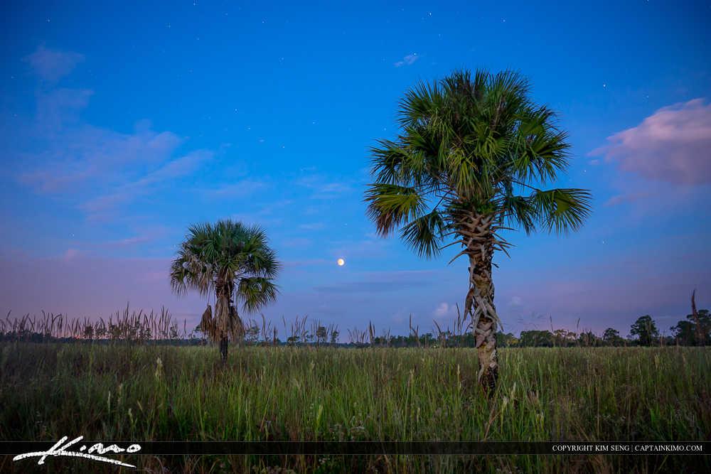 Blood Moon Solar Eclipse Over Florida Wetlands