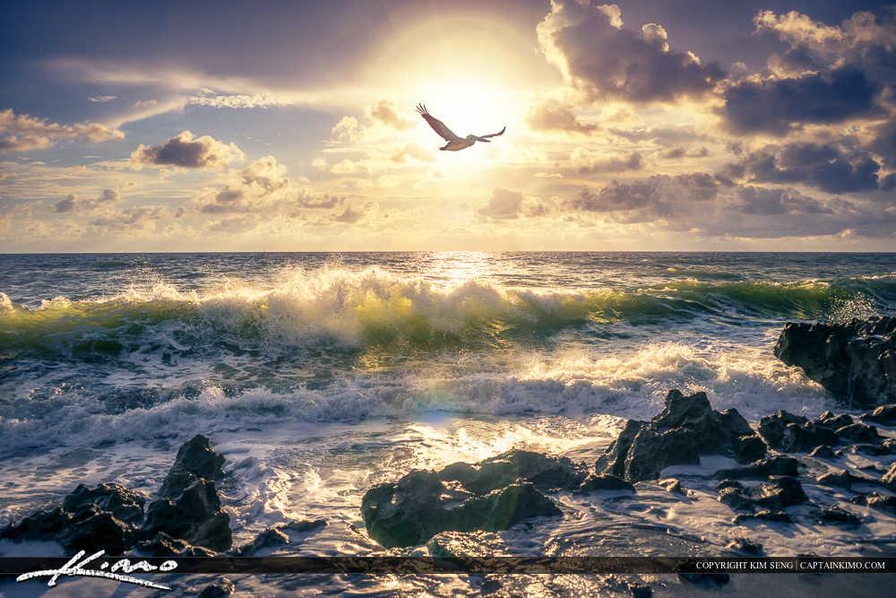 Pelican Flighting Over Wave at Beach