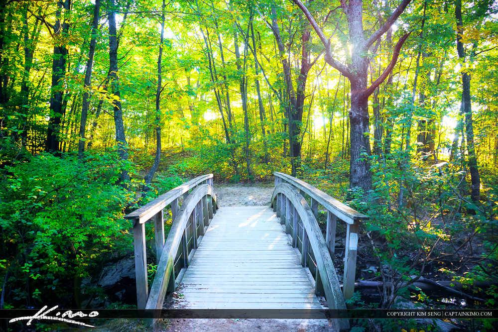 Wooden Bridge Forest Trail Portland Maine