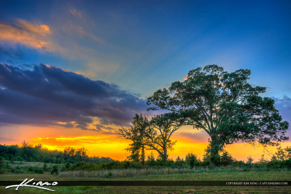 Virginia Landscape Beautiful Sunset with Tree