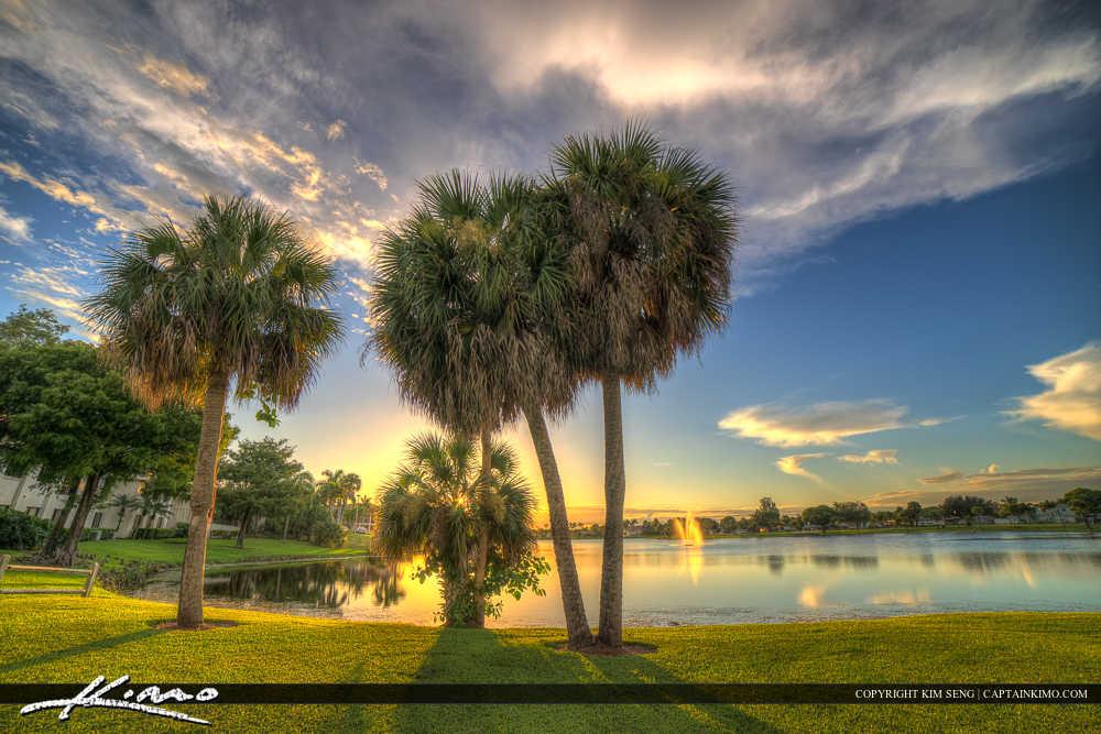 Royal Palm Beach Florida Palm Tree at Park