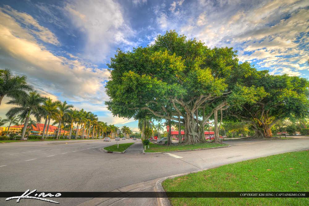 Royal Palm Beach Florida Banyan Tree at Plaza