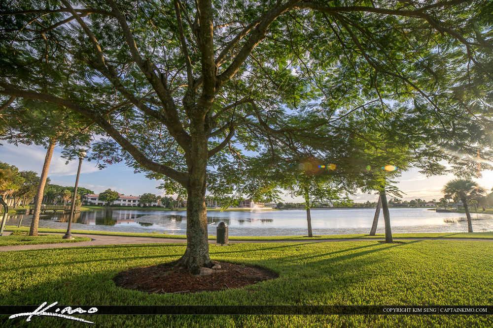 Royal Palm Beach Florida Under the Tree