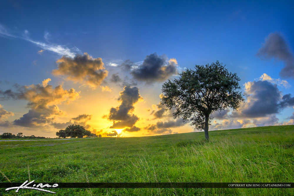 Grassy Hill Lone Tree at Sunset Dyer Park