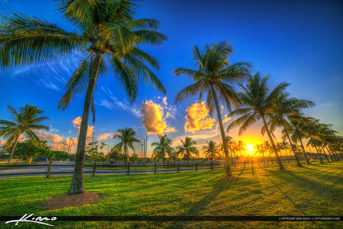 Wellington Florida Coconut Palm Tree Sunset Village Park