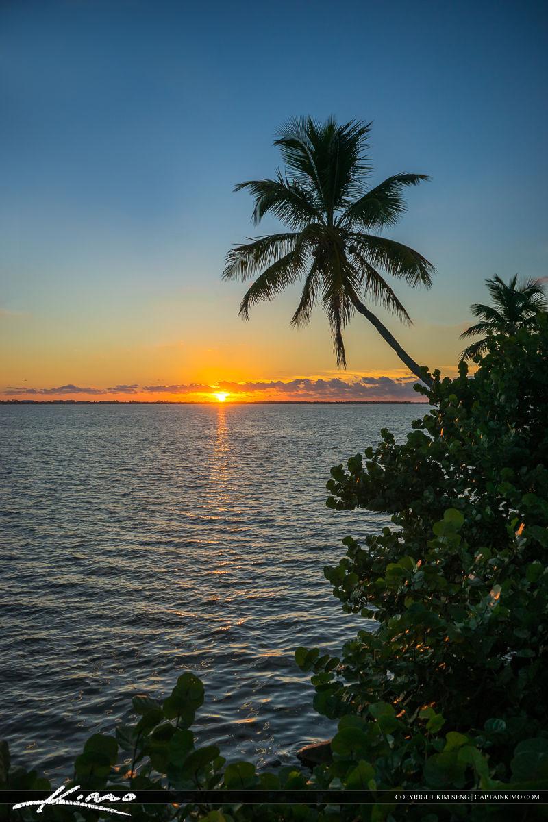 Coconut Tree Over Indian River Lagoon Jensen Beach Natural Sunri