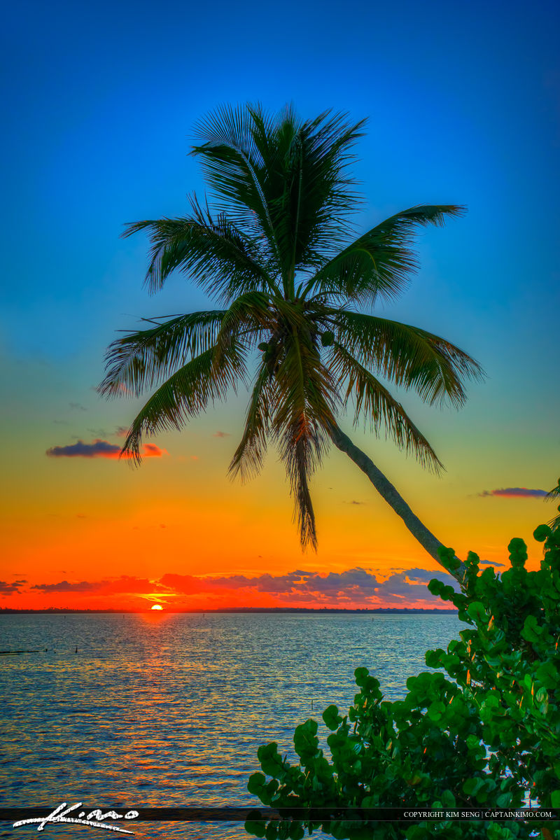 Coconut Tree Over Indian River Lagoon Jensen Beach Indian Rivers