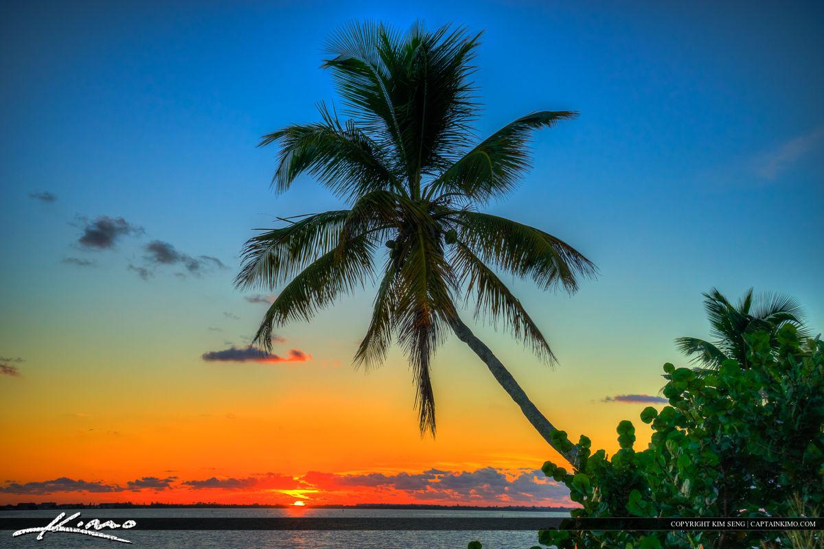 Coconut Tree Over Indian River Lagoon Jensen Beach Martin County