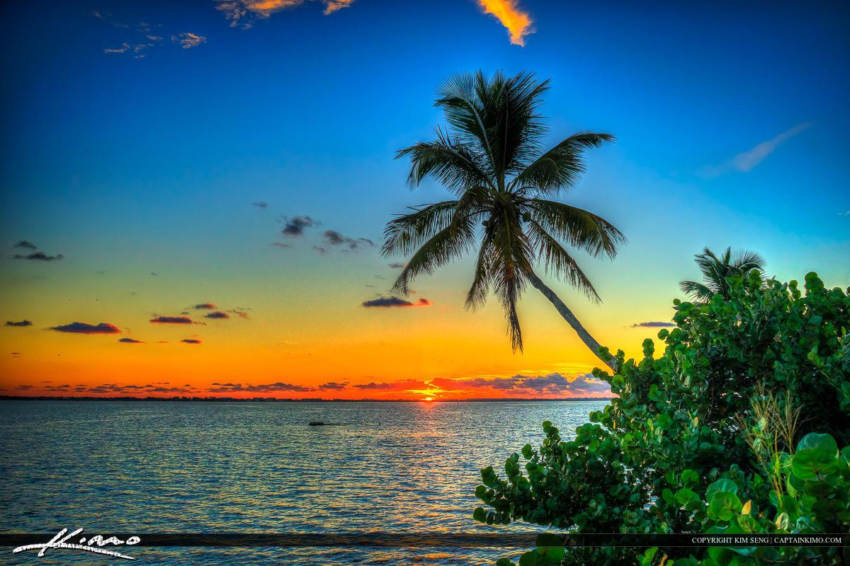 Coconut Tree Over Indian River Lagoon Jensen Beach Sunrise