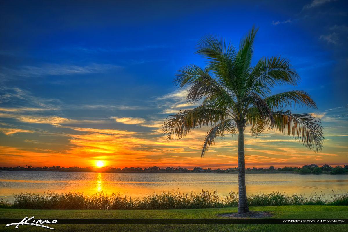 Boca Raton South County Regional Park Coconut Tree Sunset
