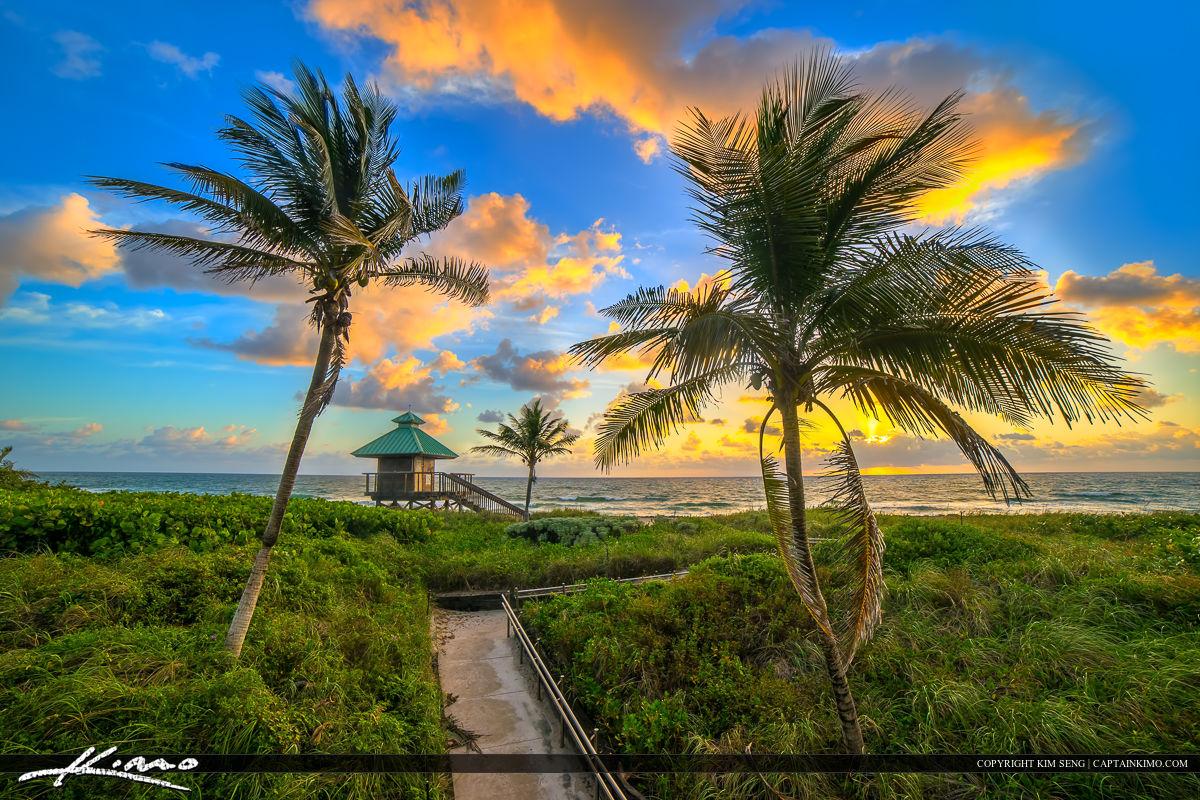 Boca Raton Beach Sunrise Coconut Palm Tree