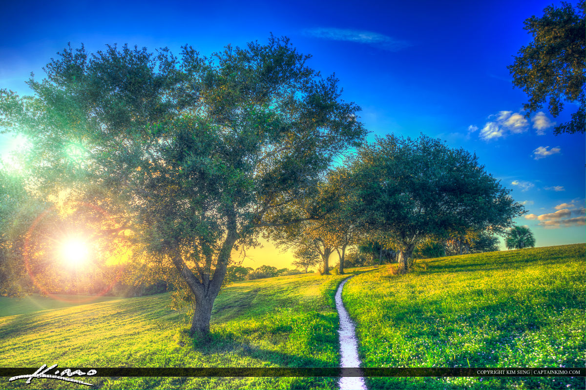 Walking Path on Grassy Hill with Oak Trees