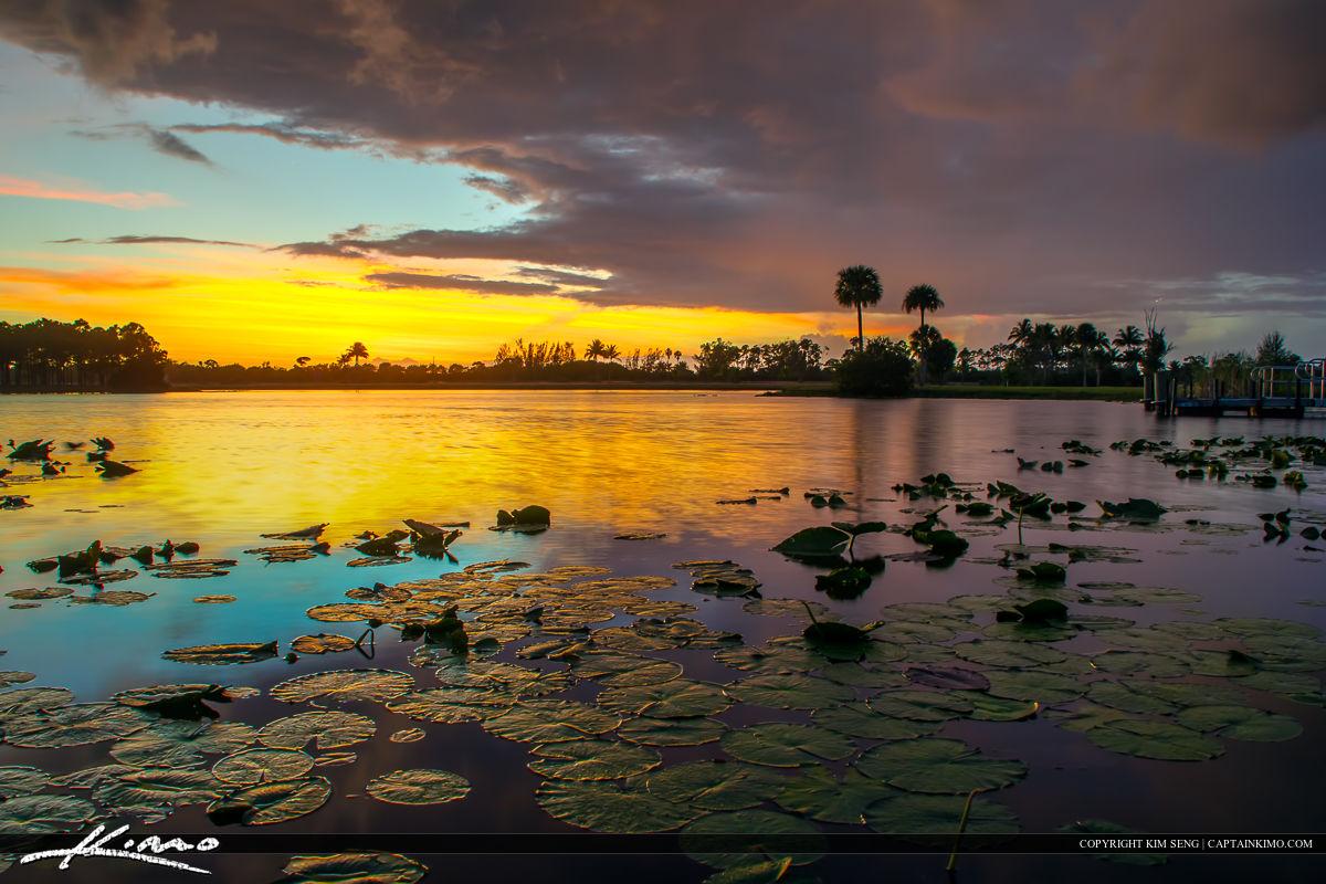 Lilypads at Lake Okeeheelee Park West Palm Beach