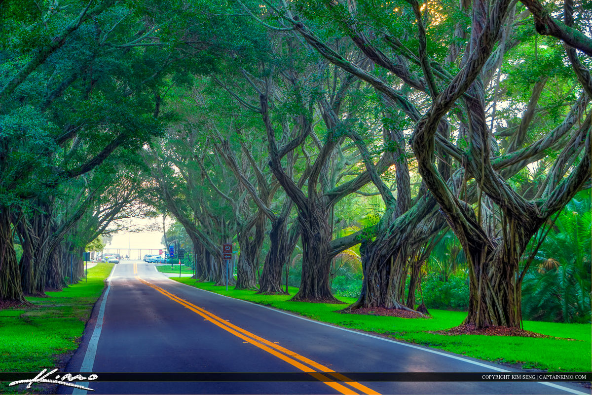 Hobe Sound at Bridge Road with Tree Coverage to Beach