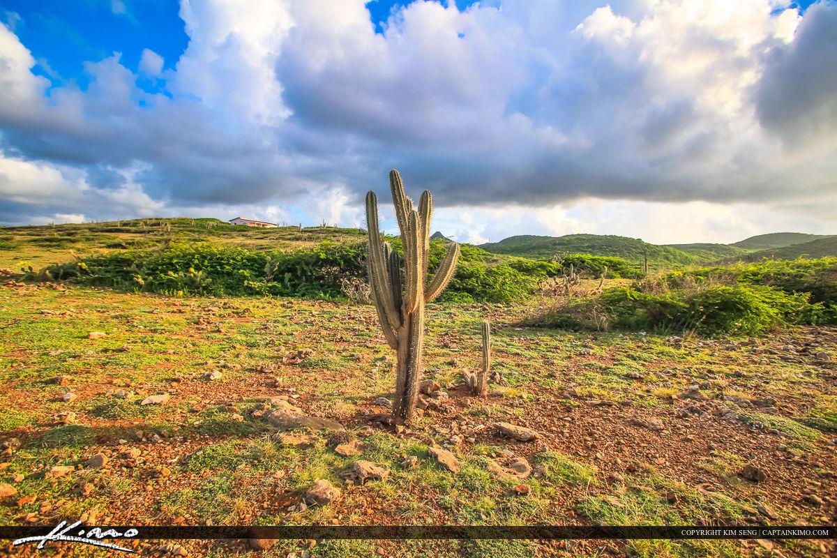 Curacao Travel Caribbean Islands Cactus on Island