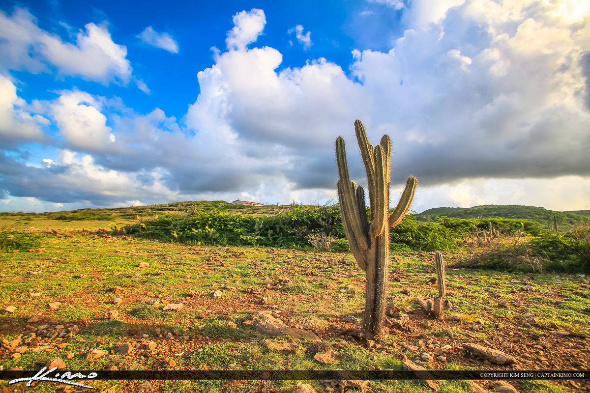 Curacao Travel Caribbean Islands Cactus Under Clouds