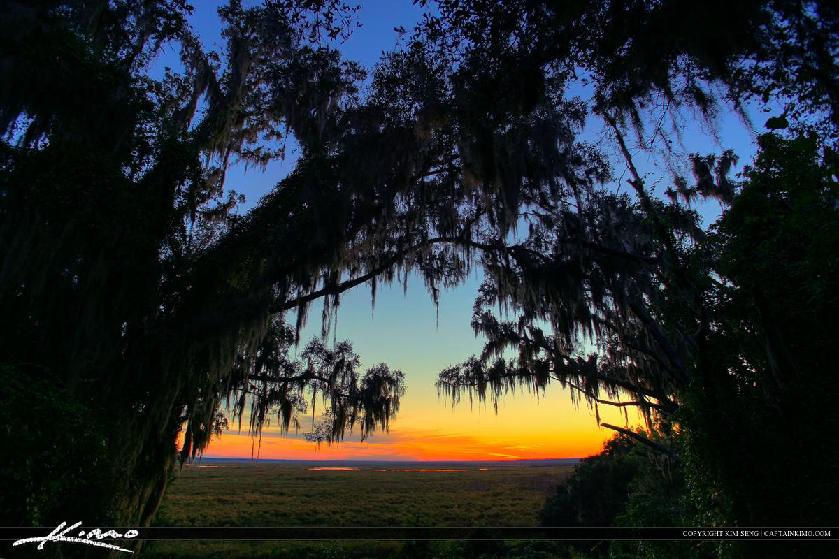 Paynes Prairie Gainesville Florida Spanish Moss