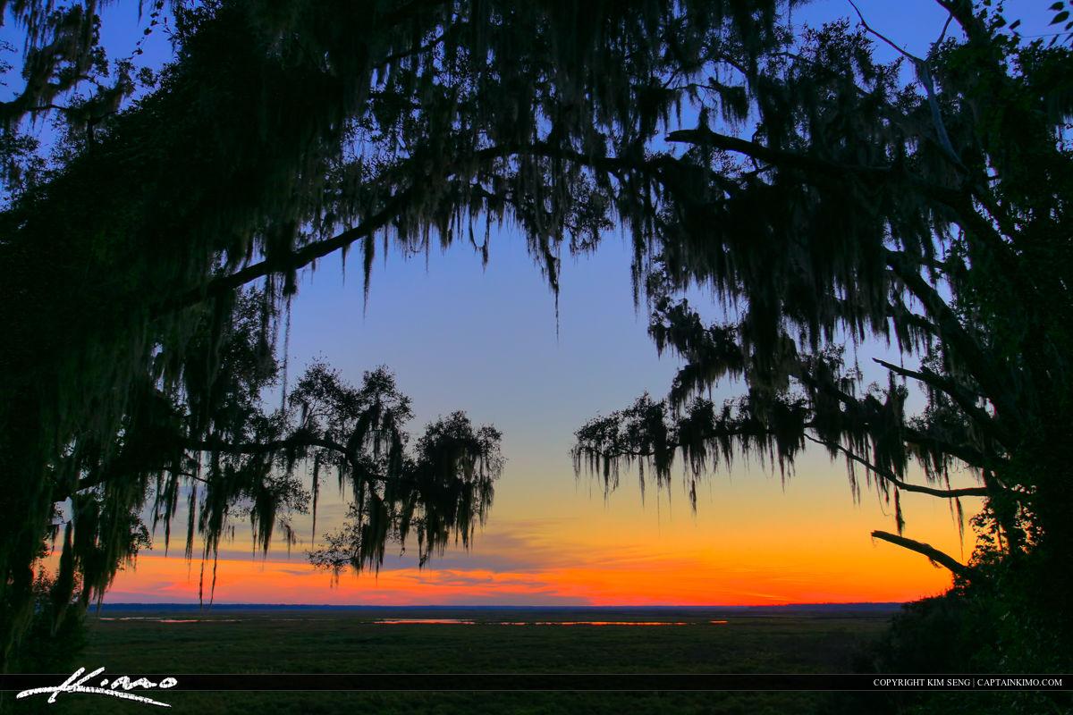 Paynes Prairie Gainesville Florida Vista Landscape