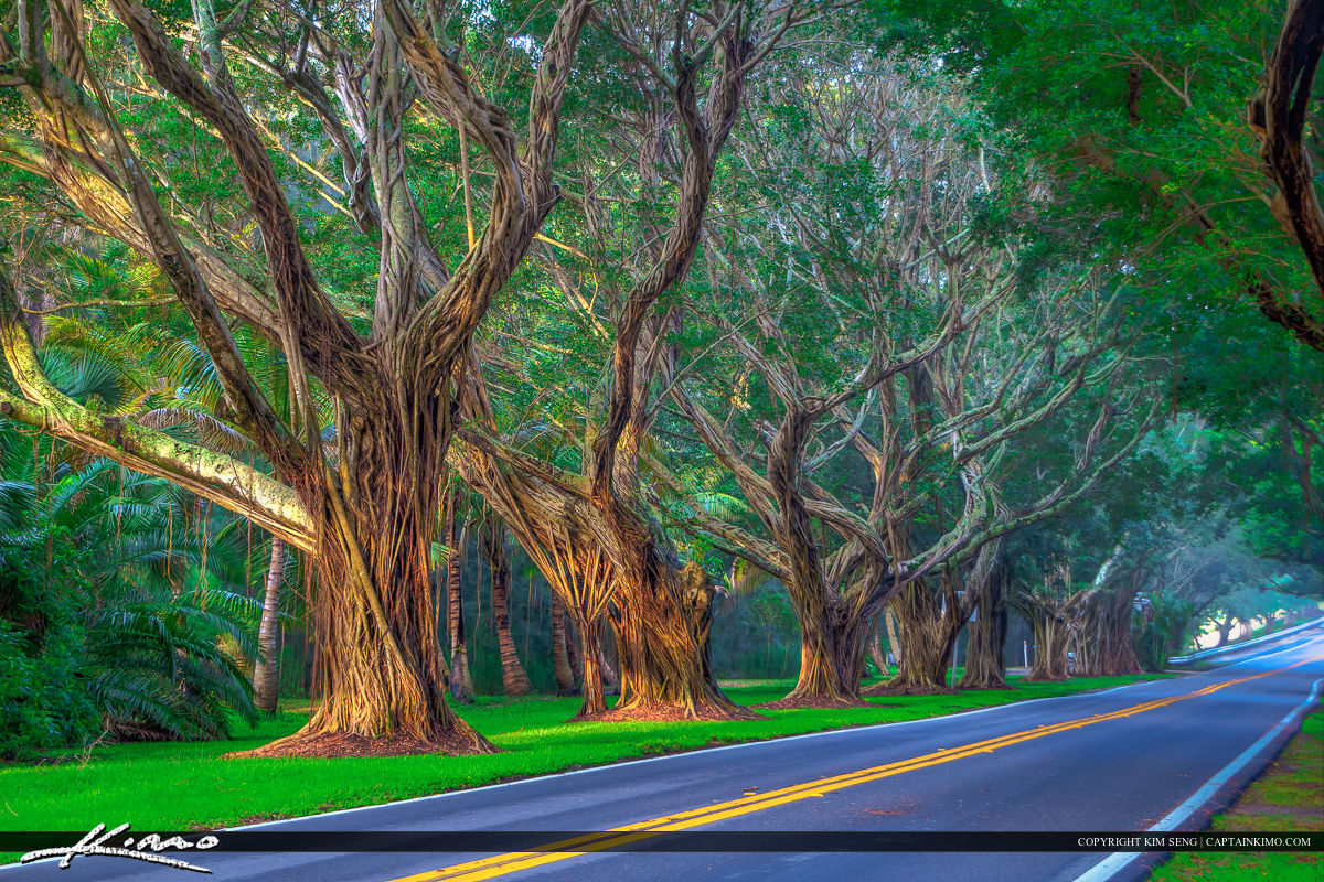 Road with Trees in Hobe Sound Florida
