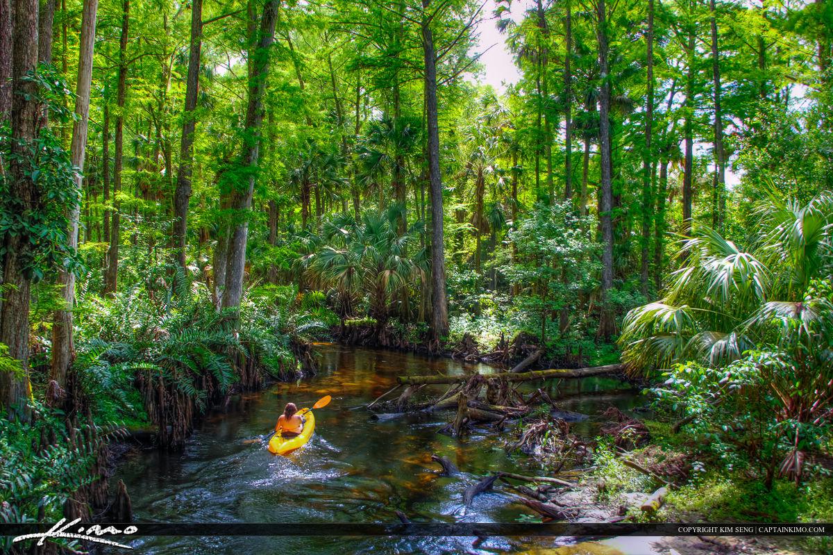 Kayaking the Loxahatchee River Palm Beach County Florida