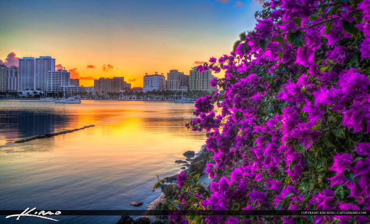 Bougainvillea West Palm Beach Florida Sunset