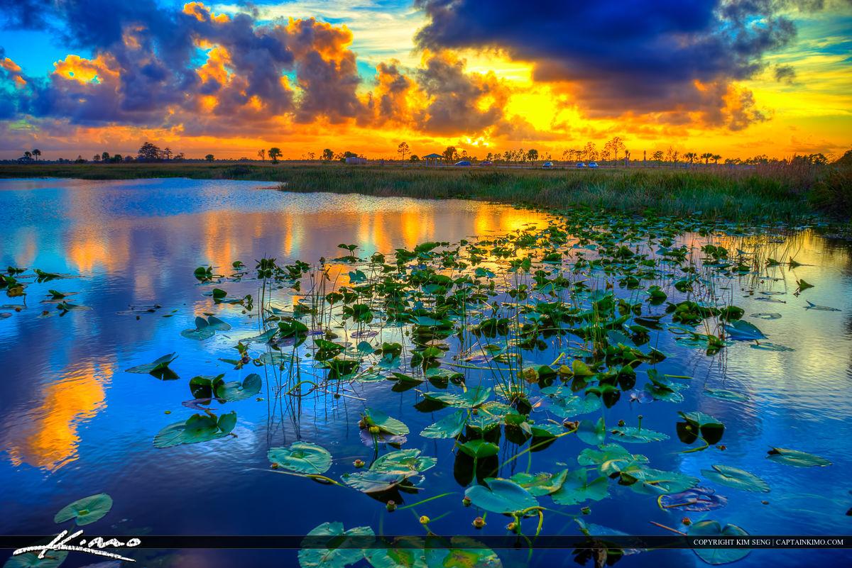 Sunset Pine Glades Florida Wetlands