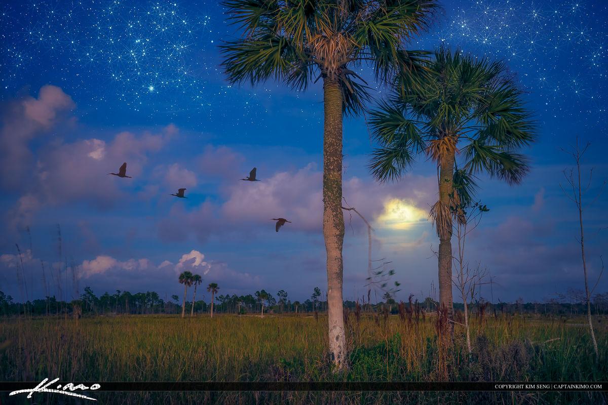 Starry Night Wetlands Florida Landscape