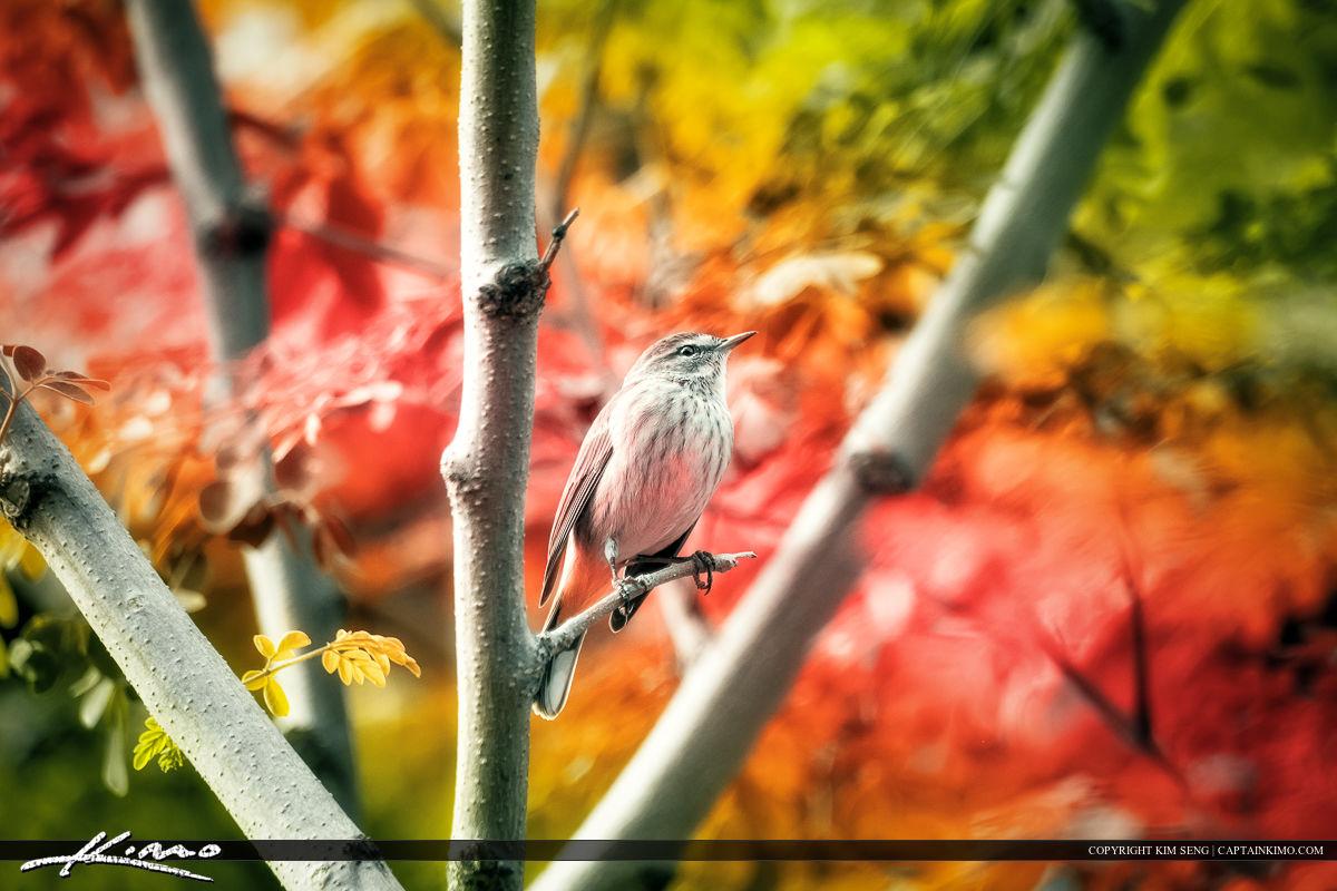 Small Warbler on Moringa Tree of Life
